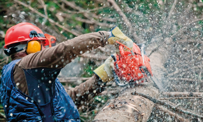 Tree Surgery Risk Assessment Services